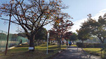 所沢市クラブ対抗戦,ソフトテニス,北野総合運動公園