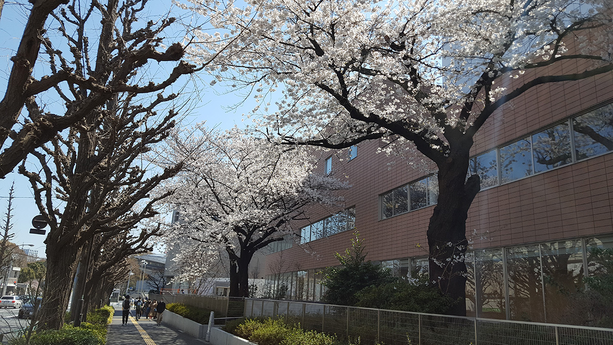 千駄ヶ谷,東京体育館,桜