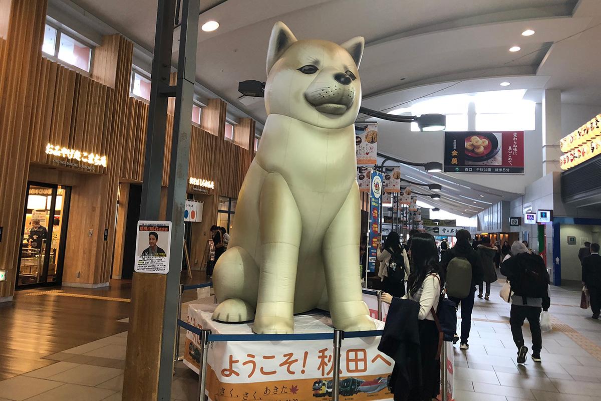 秋田駅,秋田県,秋田新幹線こまち
