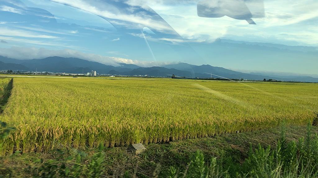 山形県天童市,田園風景,田んぼ