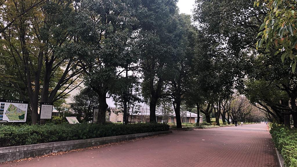 令和元年度(2019)東京都中学校新人ソフトテニス大会,都大会新人戦,府中の森公園